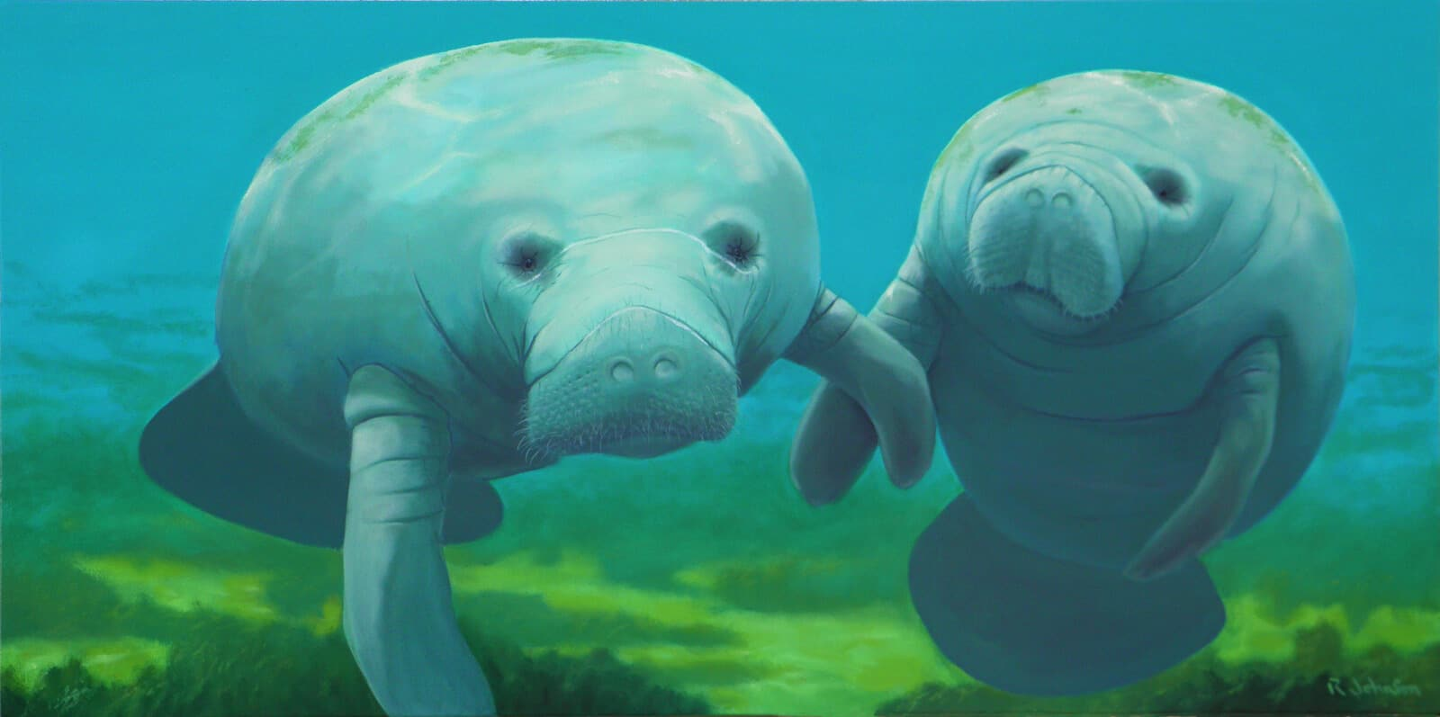 Two Manatees Robert The Artist