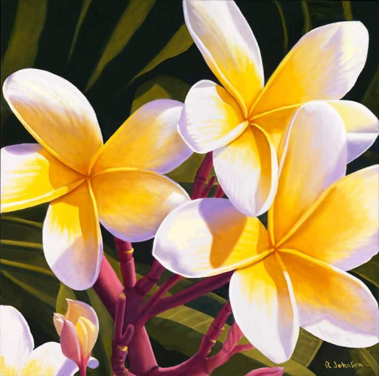 Frangiapani or Plumeria Flowers