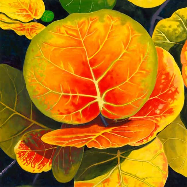Vibrant leaves of the seagrape tree, oil painting by Robert Johnson